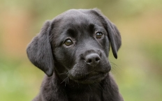 Chrissie is a lightning-fast Labrador, who loves performing tricks with her food bowl.