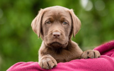 Elton the Labrador is an affectionate sleepy-head – and, it seems, a star pupil already.